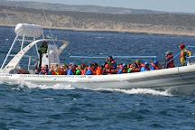 Whales Argentina, Puerto Piramides, Argentina