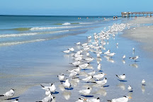 Seaside Seabird Sanctuary, Indian Shores, United States