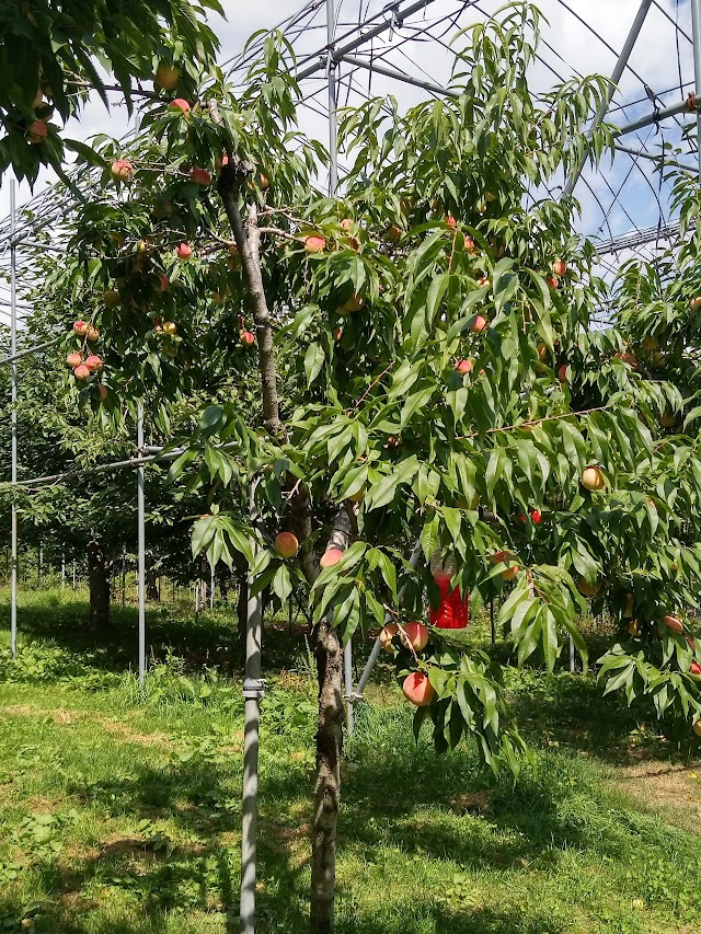 Jozankei Farm - Fruit Theme Park -