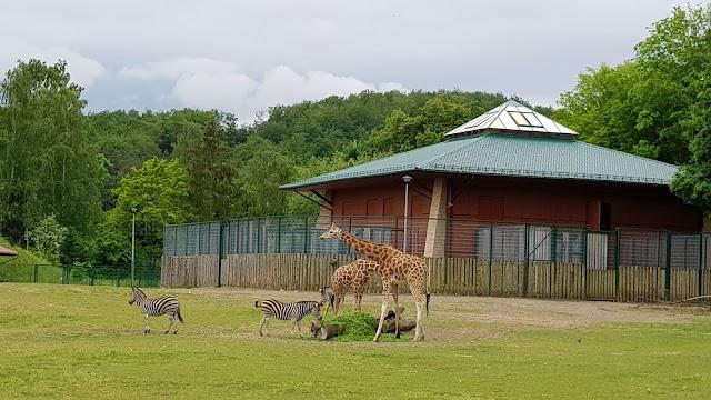 Zoo Gdańsk Oliwa