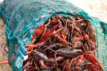 Seven Seas Seafood Market, Murrells Inlet, United States