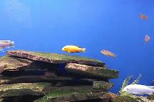 Aquarium Terrarium Sibenik, Sibenik, Croatia
