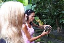 Neotropical Butterfly Park, Lelydorp, Suriname