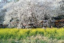 Kumagaya Sakura Tsutsumi, Kumagaya, Japan