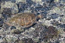 Kiholo Bay, Kailua-Kona, United States