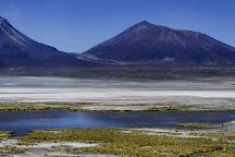 Salar de Coposa, Pica, Chile