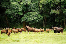 Peppara Wildlife Sanctuary, Thiruvananthapuram (Trivandrum), India