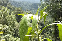 Gavilana Permaculture, El Castillo, Costa Rica