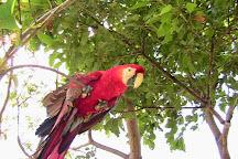 Jungla de Panama Wildlife Refuge, Boquete, Panama