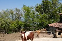 Living Roots Horse Ranch, Signagi, Georgia