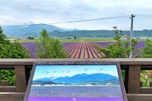 Farm Tomita Lavender East, Kamifurano-cho, Japan