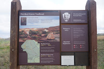 Petrified Forest Loop, Theodore Roosevelt National Park, United States
