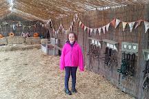 Shetland Pony Club, Cobham, United Kingdom