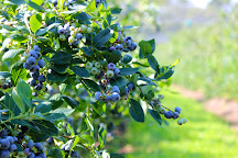 Hokum Rock Blueberry Farm, Dennis, United States