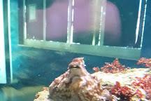 Aquarium, Isola di Capo Rizzuto, Italy