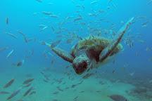 Diving Atlantis Tenerife, Guia de Isora, Spain
