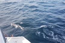 Sri Lanka Whales Marriot Cruise, Mirissa, Sri Lanka