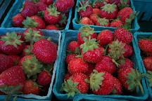 Wickham's Fruit Farm, Cutchogue, United States