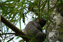 Finca Los Monos Botanical Garden, Isla Colon, Panama