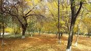 Парк 70-летия Победы, проспект Ленина на фото Волгограда