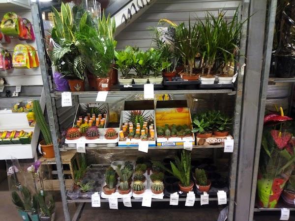 Склад-магазин цветов азалия