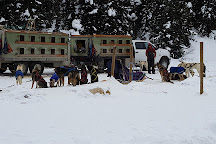 Kingmik Dog Sled Tours, Lake Louise, Canada