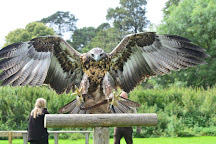 York Bird of Prey Centre, Huby, United Kingdom