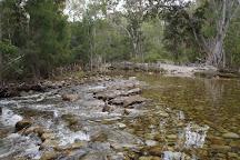 Mount Lewis National Park, Julatten, Australia