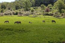 Wildlife Safari, Winston, United States