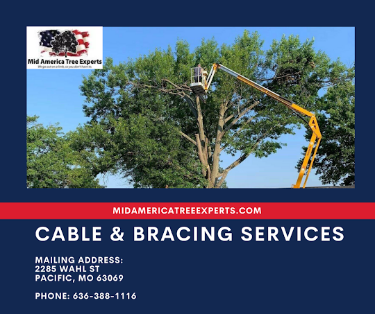 Tree Removal St Louis
