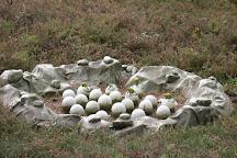 Parc de Prehistoire de Bretagne, Malansac, France