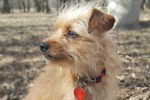 Tails and Trails Dog Park, Arlington, United States