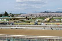 Mizusawa Horse Tracks, Oshu, Japan