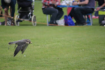 Coda Falconry, Waltham Abbey, United Kingdom
