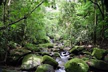 Square Trees Nature Trail Arboles Cuadrados, El Valle de Anton, Panama