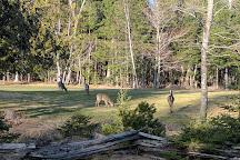Mactaquac Provincial Park, New Brunswick, Canada