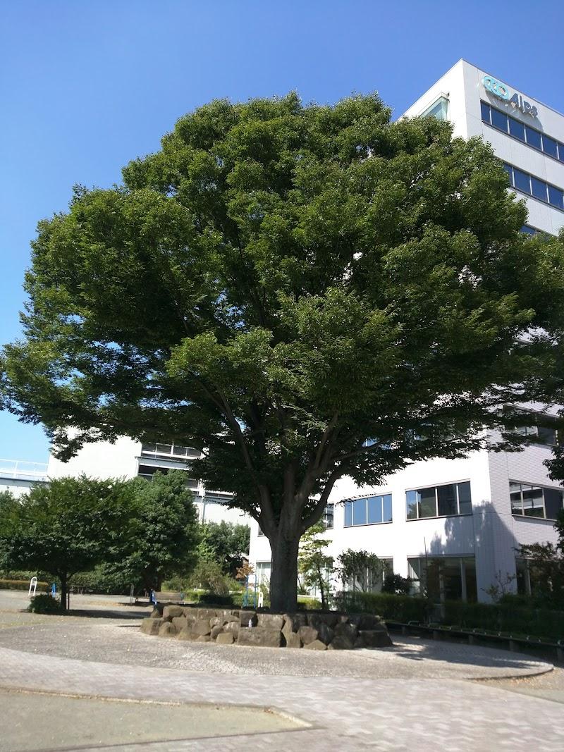 西橋本ほほえみ公園