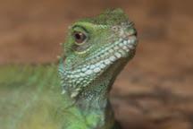 Iguana Reptile Zoo, Zeeland Province, The Netherlands