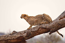 Tambuzi Safaris, Hoedspruit, South Africa