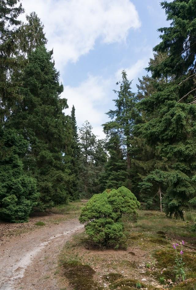 Pinetum de Dennenhorst