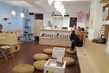 Espai de gats, Barcelona, Spain
