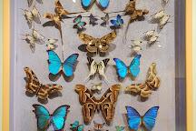 La Maison des Papillons, Saint-Tropez, France