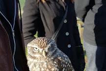 North Somerset Bird of Prey Centre, Congresbury, United Kingdom