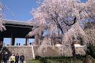 Togo-ji Temple