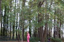 Fun Forest, Munnar, India