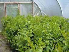 GROWER DIRECT HANBURY