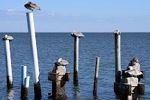 Tidewater Tours, Cedar Key, United States
