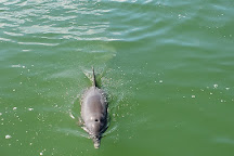 The Dolphin Explorer, Marco Island, United States