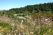 Marimar Estate Vineyards and Winery, Sebastopol, United States