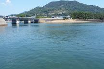Kazusa Dolphin Watching, Minamishimabara, Japan